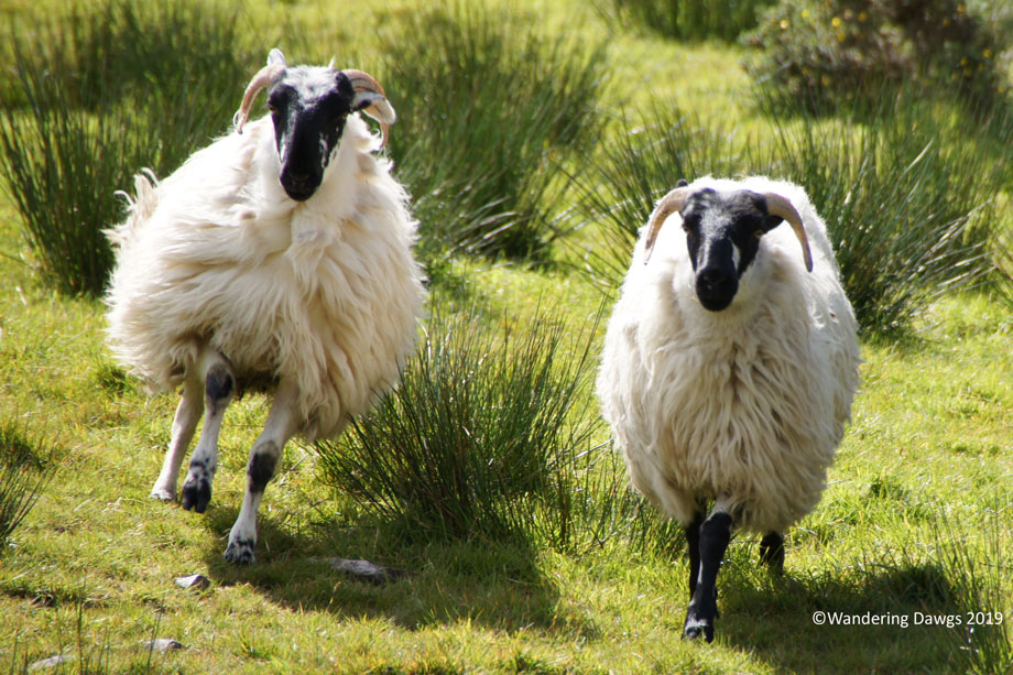 20190509-Day-9-Ring-of-Kerry-Sony-(113)