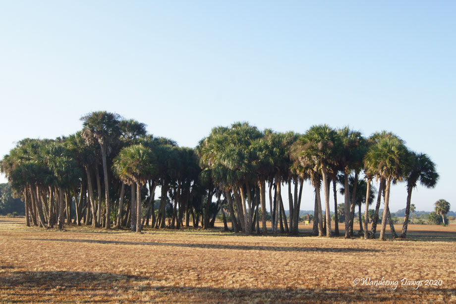20120110The-Glades-(1)