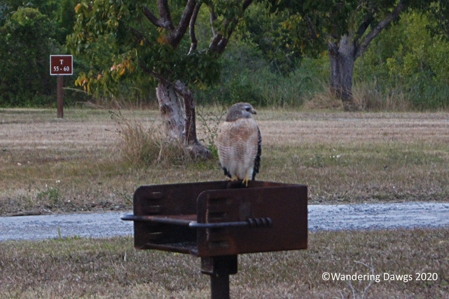 20120116Flamingo-Campground-(23)