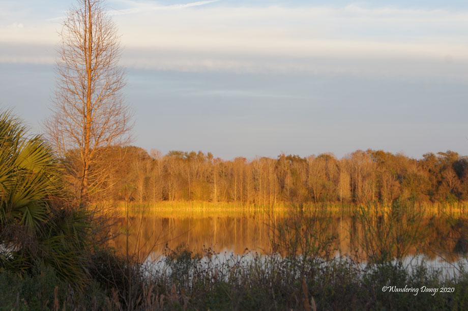 20120122Alafia-River-(3)