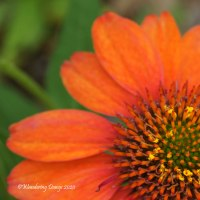 Lens-Artists #101: One Single Flower