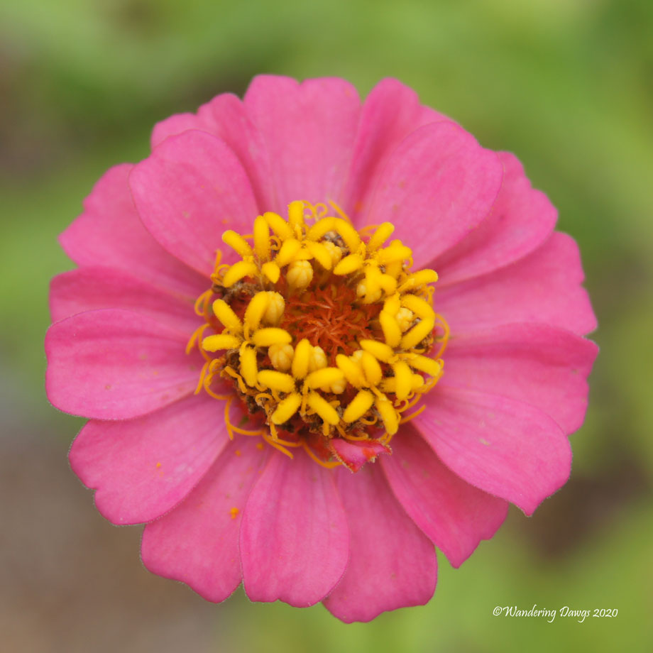 20200614-Garden-Flowers-(2)