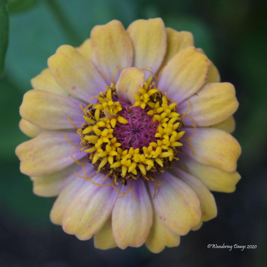 20200614-Garden-Flowers-(7)