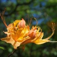 Lens-Artists #105: Spring