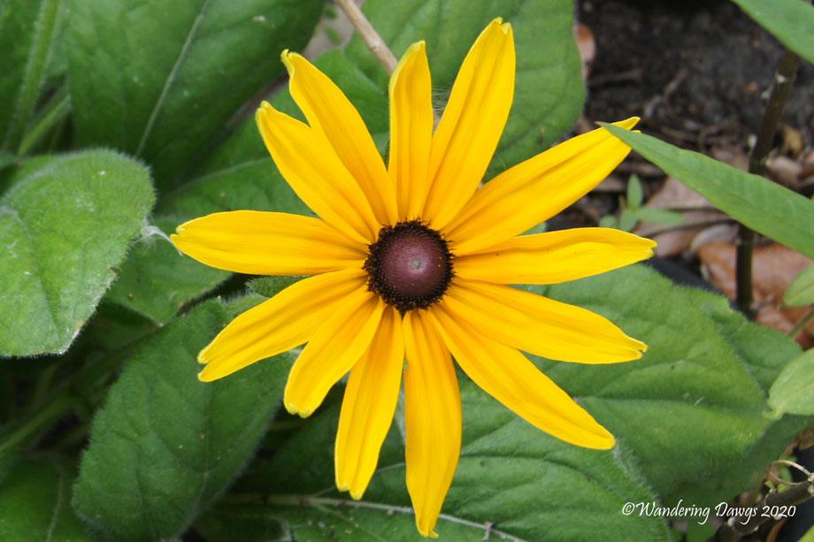 20200702-North-Beach-flower