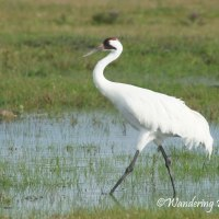 Bird Weekly Challenge #23: Long Legged Birds