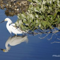 Bird Weekly Challenge - Reflections of Birds