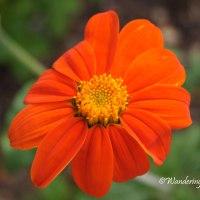 Lens-Artists Photo Challenge #143 - Colorful April