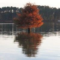 Lens-Artists Photo Challenge #167 - Autumn Colors